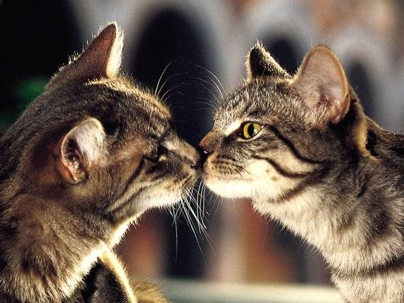 Vriendschap tussen katten