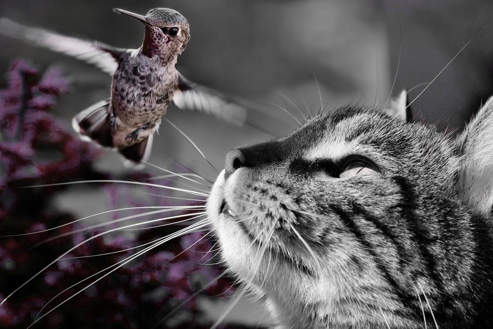 Katten komen van nature niet voor in woonkamers