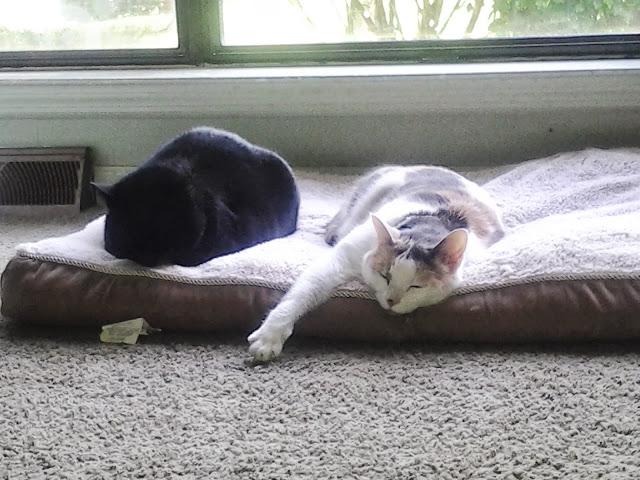 katten slapen
