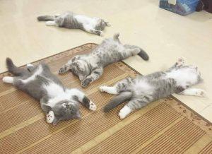 Kat aan huis laten wennen