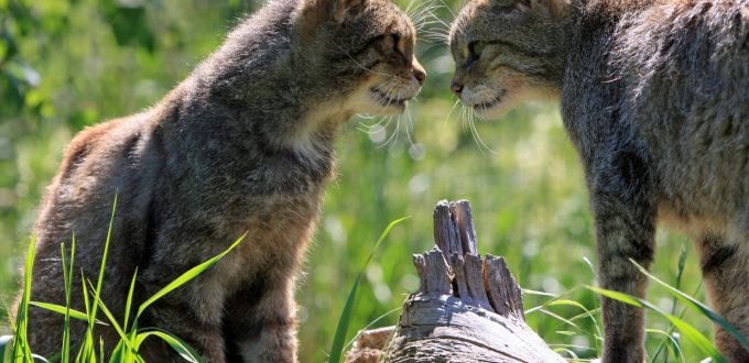 katten eerste ontmoeting