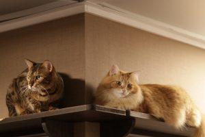 Plankjes Aan De Muur Voor Kat.Verhuizen En Katten Lekker In Je Vacht