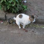 kat plast tussen bladeren