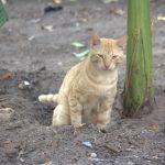 kat plast in aarde