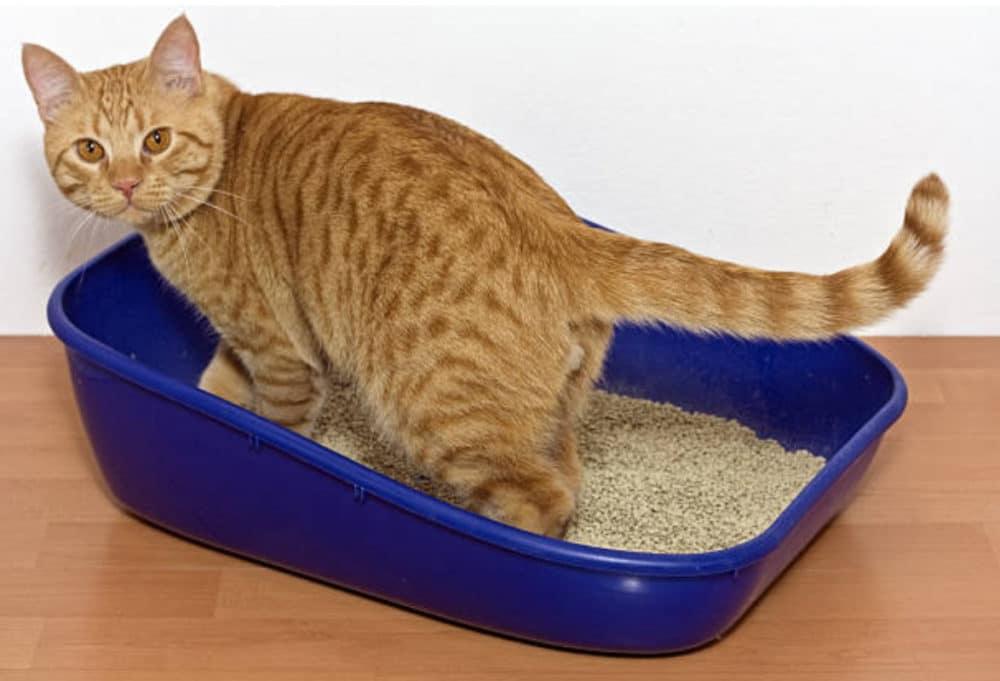 beste kattenbak is groot genoeg