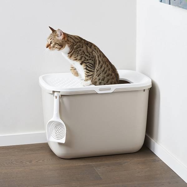 hop in kattenbak met boveningang kan zorgen voor poep of plas naast de kattenbak