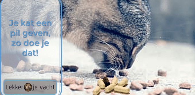 kat pil geven
