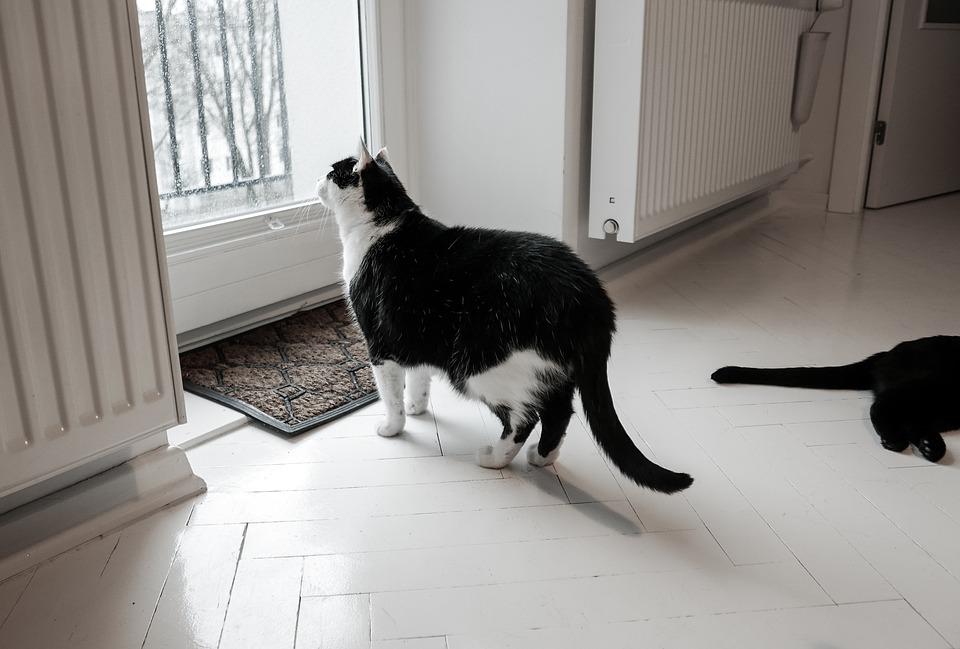kat alleen thuis