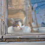 Hoelang kan een kat alleen zijn? Kater wacht op baas