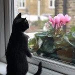 Hoelang kan een kat alleen zijn? kitten wacht op baas